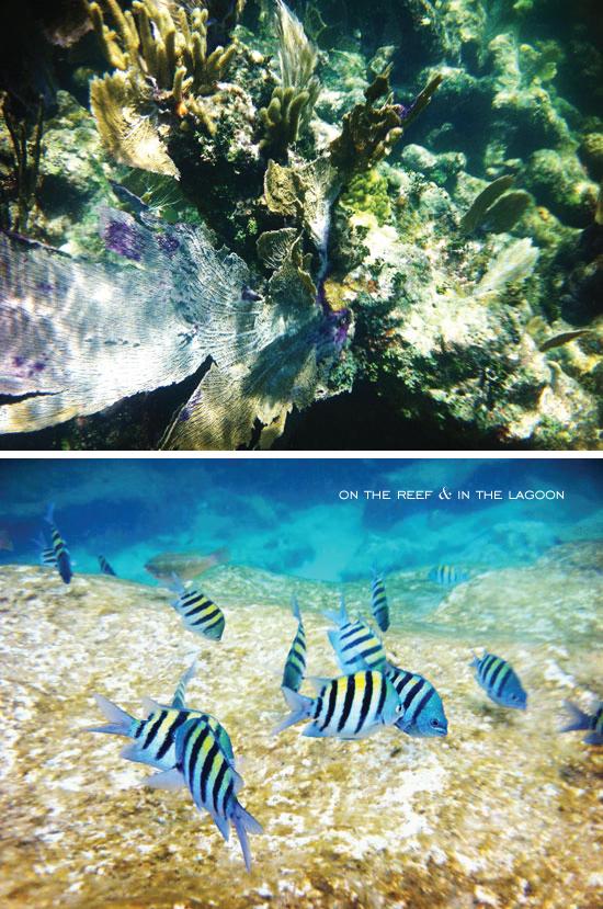 Reef_lagoon