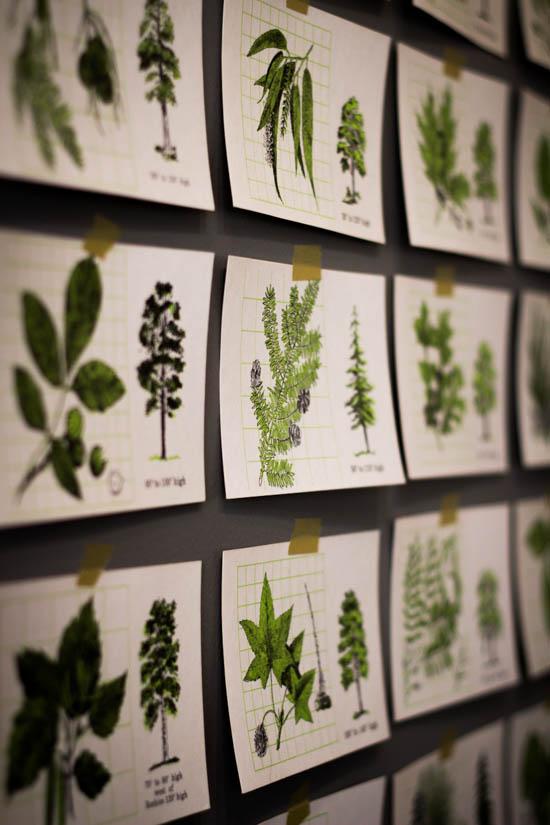 TreeFlashcards-5462