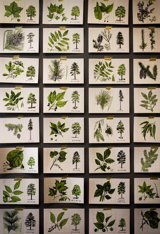 TreeFlashcards-5469