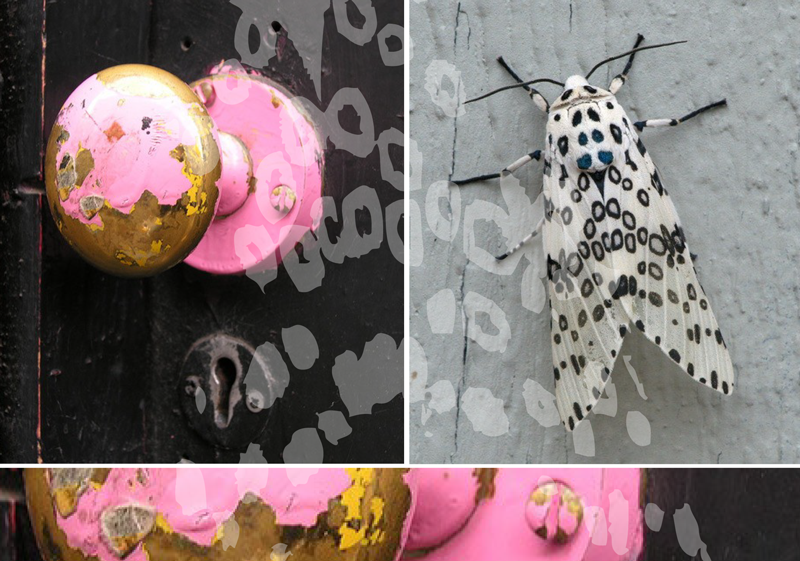 Moth_doorknob