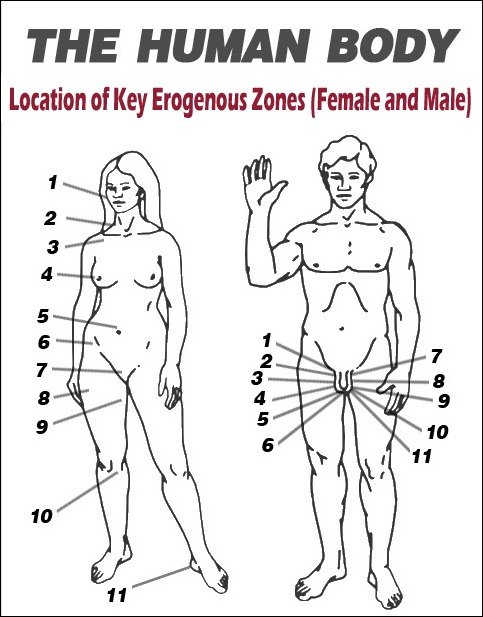 HumanBodyLocationofZones