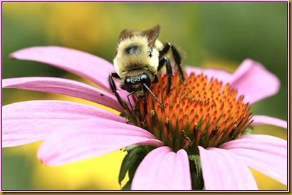 BeeEnlarge-1