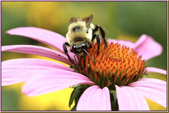BeeEnlarge-2